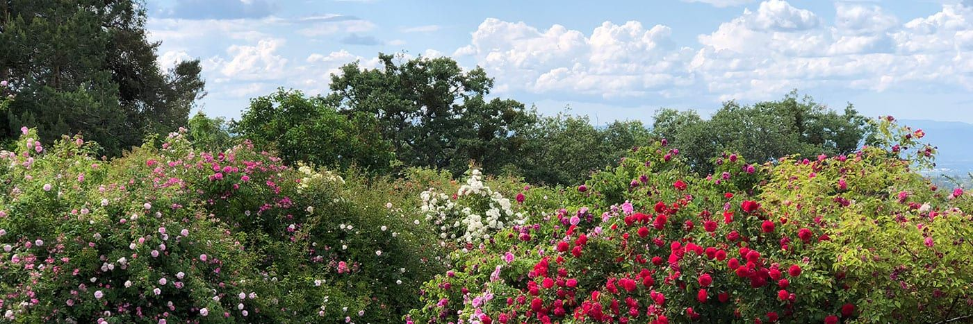 Rogue Valley Roses, rose nursery in Southern Oregon